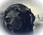 Labrador Digital Art - Vintage Black Lab by Eleanor Abramson