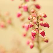 HJBH Photography - Vintage blossom