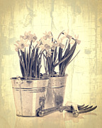 Potting Framed Prints - Vintage Daffodils Framed Print by Christopher and Amanda Elwell