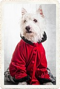 Dog Photo Prints - Vintage Fashion Dog Print by Edward Fielding
