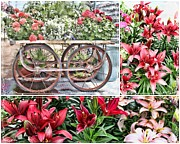 Red Geraniums Prints - Vintage Flower Cart Collage Print by Sylvia Thornton