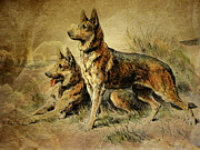 Canines Digital Art - Vintage German Shepards by Pamela Phelps