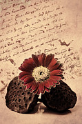 Floral Still Life Mixed Media Prints - Vintage letters Print by Angela Doelling AD DESIGN Photo and PhotoArt