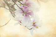 Tracy Munson Metal Prints - Vintage Magnolia Metal Print by Tracy Munson