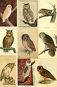 Audubon Digital Art Posters - Vintage Owls Montage Poster by Philip Ralley