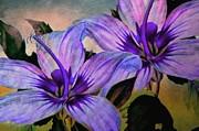 Judy Palkimas - Vintage Painted Lavender...