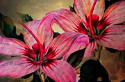 Judy Palkimas - Vintage Painted Pink Lily