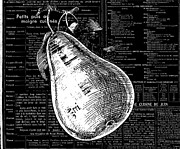 Commercial Mixed Media Posters - Vintage Pear on Black and White French Recipe Text Poster by Anahi DeCanio