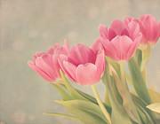 Vintage Pink Tulips Print by Kim Hojnacki