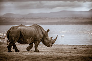 Rhinoceros Framed Prints - Vintage Rhino On The Shore Framed Print by Mike Gaudaur