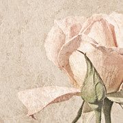 Beige Prints - Vintage Rose Print by Brooke Ryan