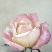Vintage Rose In Pink And Robin's Egg Blue Print by Brooke Ryan