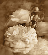 Umber Framed Prints - Vintage Roses Bouquet in Sepia Framed Print by Jennie Marie Schell