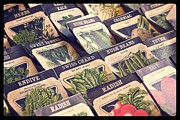 Swiss Photo Prints - Vintage Seed Packages Print by Edward Fielding