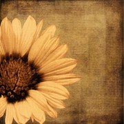 Antique Look Digital Art - Vintage Style Daisy by Janice Austin