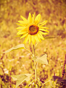 Vibrant Metal Prints - Vintage Sunflower Metal Print by Wim Lanclus