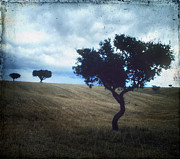 Outdoors Art - Vintage trees by Bernard Jaubert