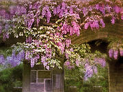 Purple Flowers Digital Art - Vintage Wisteria by Jessica Jenney
