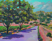 California Vineyard Paintings - Vinyard by Tim Lutrey