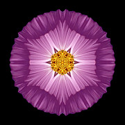 Violet Cosmos II Flower Mandala Print by David J Bookbinder