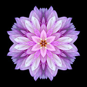 Violet Dahlia I Flower Mandala Print by David J Bookbinder