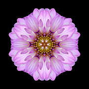 Violet Dahlia II Flower Mandala Print by David J Bookbinder