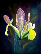 Bloom Pastels Posters - Violet Iris In Dew Poster by Wade Starr
