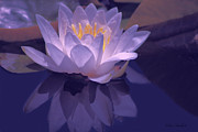 Timeless Mixed Media - Violet Lotus Bliss by Debra     Vatalaro