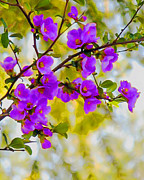 Quince Digital Art Prints - Violet Quince Print by Curtis Stein
