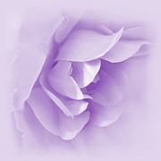 Soft Purple Posters - Violet Rose Flower Tranquillity  Poster by Jennie Marie Schell