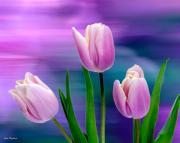 John Pagliuca - Violet Tulips