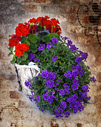 William Havle - Violets and Geraniums on...