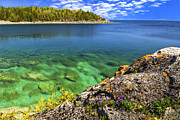 Georgian Landscape Photos - Violets at Georgian Bay by Elena Elisseeva