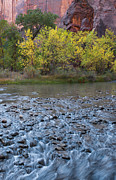 Virgin River Prints - Virgin River in Fall - Zion Print by Sandra Bronstein