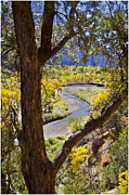Zion National Park Framed Prints - Virgin River in Zion Framed Print by Jon Berghoff