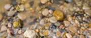 Adam Pender Prints - Virgin River Pebbles Print by Adam Pender