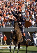 Cavaliers Posters - Virginia Cavaliers Mascot at Football Game Poster by Jason O Watson