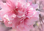 Pink Blossoms Photo Posters - Vision in Pink - Digital Painting Poster by Carol Groenen