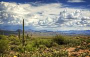 Visions Of Arizona  Print by Saija  Lehtonen