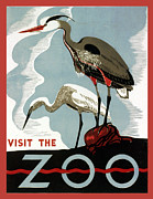 Bureau Prints - Visit The Zoo Egrets  Print by Unknow