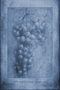 Vitis Cyanotype Print by John Edwards