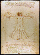 Proportions Drawings Framed Prints - Vitruvian Man by Leonardo da Vinci  Framed Print by Karon Melillo DeVega