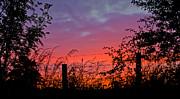 Liz  Alderdice - Vivid Sunset