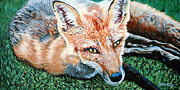 Vixen Paintings - Vixen - Red Fox by Donna Proctor