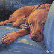 Vizsla Napping Print by Terry Albert