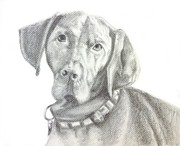 Dog Lover Drawings Posters - Vizsla Poster by Sun Cruise