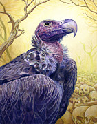 Hawk Painting Framed Prints - Vulture Framed Print by Alan  Hawley