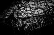 Traven Milovich - Vulture I