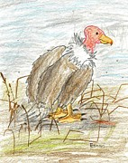 Vulture Drawings Metal Prints - Vulture on the grassy plains Metal Print by Ethan