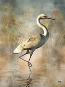 Daniel Eskridge - Wading Egret
